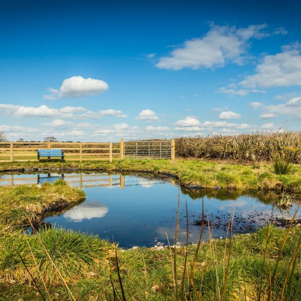 Wildlife area near Redhouse Farm Bed & Breakfast